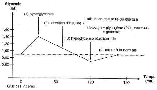 creatine-glucides