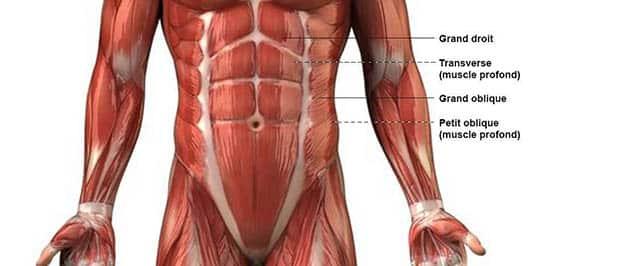 séance abdos débutant : l'anatomie des abdominaux