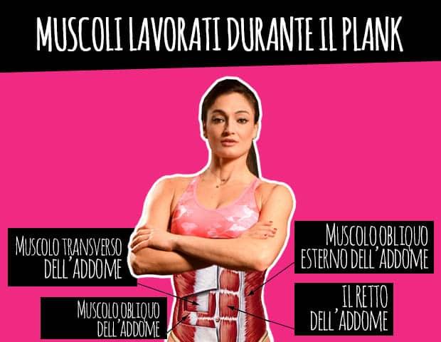 muscoli addominali plank