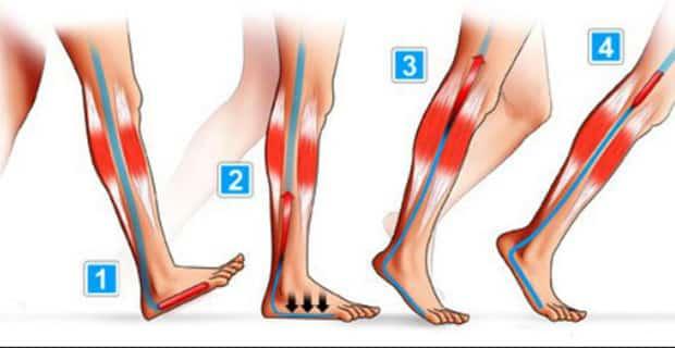 jambes lourdes remede marche